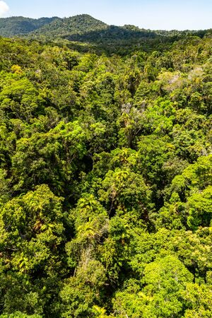 Top view of green and majestic Australian rainforest from a cableway in Kuranda