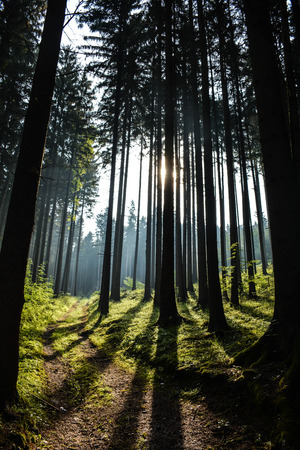 ceska: Forrest Sunshine Stock Photo