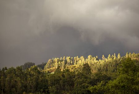 Panoramic view of the a forest in the central Andean mountains of Colombia illuminated by the light of the sunset against an overcasted sky.