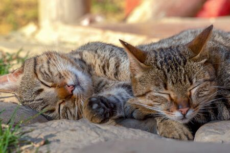 Close-up photography of sleeping domestic cats