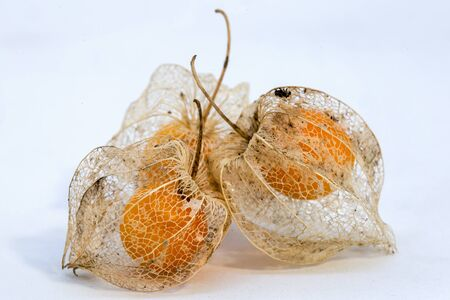Macro photography of three goldenberries dried calyxes with the ripe fruit inside them.