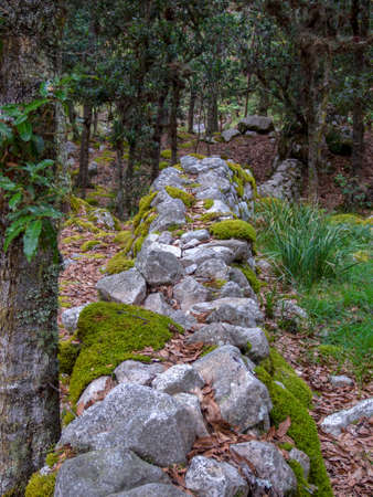 Different sections of a very old stone wall covered in moss, at the hilsidel of the Iguaque mountain in the central Andes of Colombia. Imagens