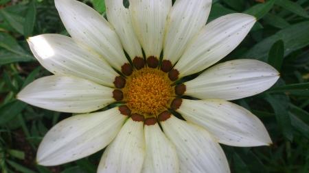 A beautiful flower Stock fotó