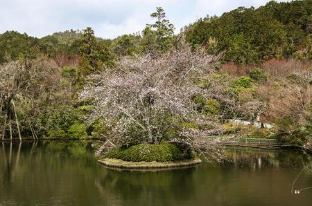 Kyoyochi pond in Ryoanji Temple, Kyoto, Japan Stok Fotoğraf