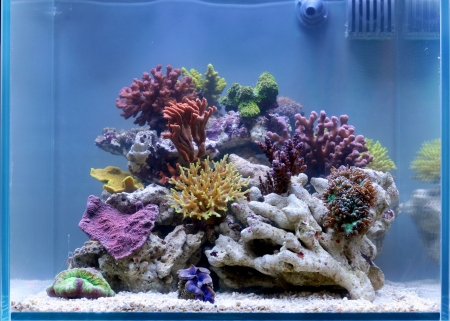 wonderful reef tank