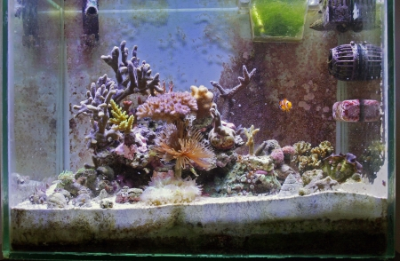 A marine aquarium with fishes and corals Stock Photo - 16331897