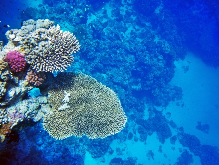 A coral reef with small fishes Stock Photo - 16331876