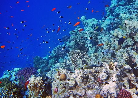 A coral reef full of small fishes Stock Photo - 16556446