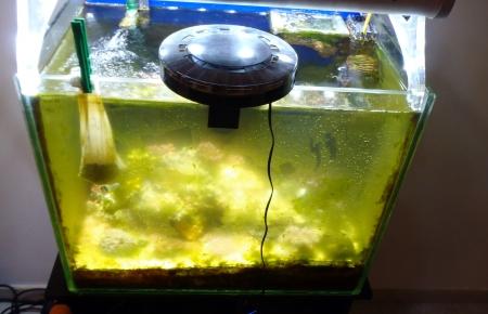An abandoned marine aquarium full of algae and cyanobacteria Stock Photo