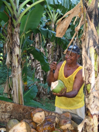 Dominican Republic, River chavon: Coconut seller Stock Photo
