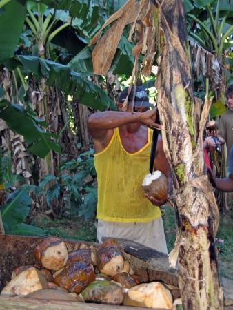 Dominican Republic, River chavon: Coconut seller photo