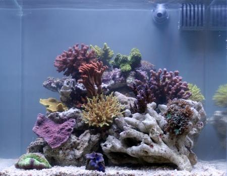 An awesome coral aquarium Stock Photo - 16805755