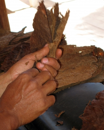 Rolling a cigar in Dominican Republic Stock Photo