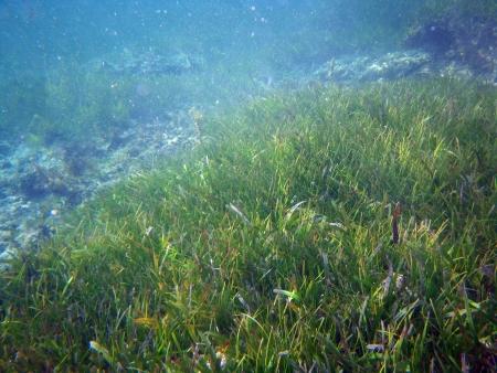 reefscape: Kenya, sea full of algae during october