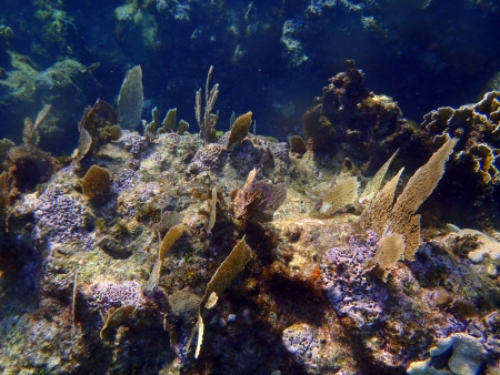 Caribbean sea: corals in Varadero photo