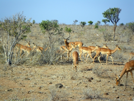young gazelles at lunch Stock Photo