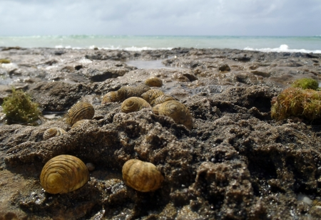 molusk: Group of sea snails in front of the sea in Maria la Gorda Cuba Stock Photo