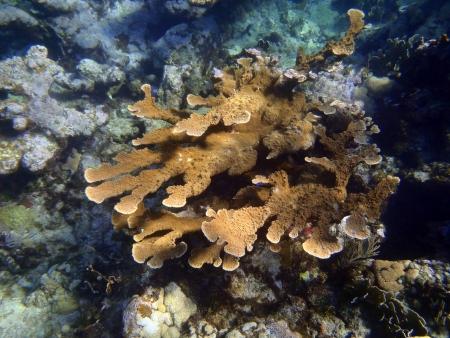 varadero: Caribbean sea  corals in Varadero Stock Photo
