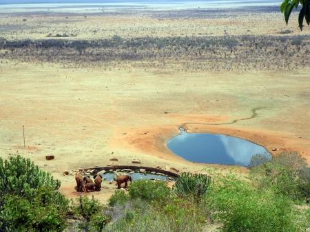 Elephants in Tsavo, Kenya