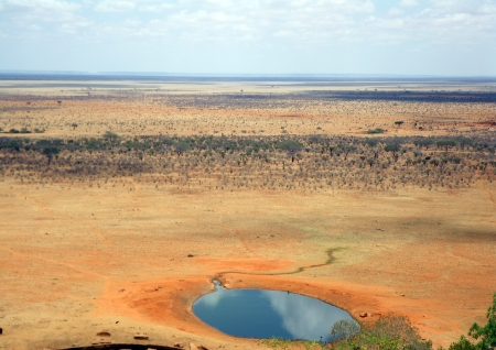 tsavo: savannah in the summer tsavo, kenya Stock Photo