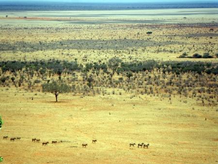 tsavo: Zebras in Tsavo National Park Stock Photo