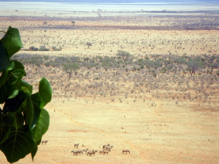 The African Savannah in the Tsavo East National Park Stock Photo