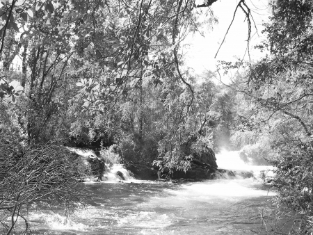 Forest and River, south of Chile Stock Photo - 18358324