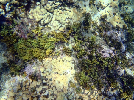 Caribbean sea  corals in Varadero photo