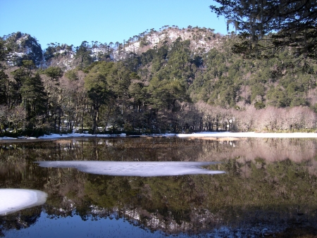 A lake in the forest close to Pucon, Chile photo
