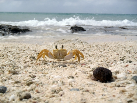 crab at a beach