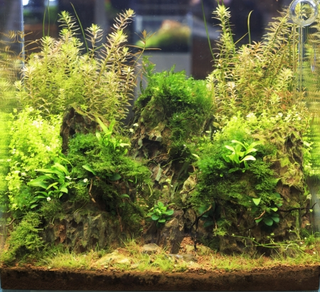 Heavily planted freshwater aquarium