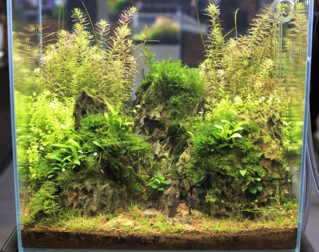 Heavily planted freshwater aquarium photo