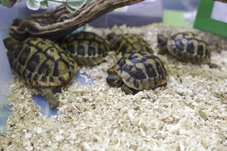 baby tortoises Stock Photo
