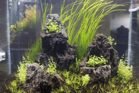 freshwater aquarium plants: Freshwater aquarium with plants
