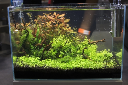 aquarium eau douce: Aquarium d'eau douce avec des plantes