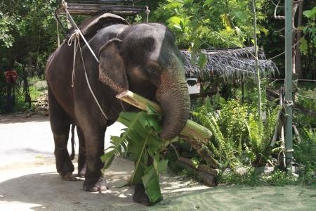 Elephant waiting for tourists Stock Photo