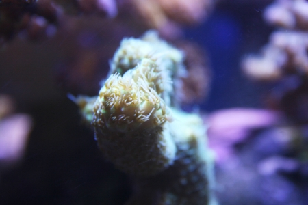 coral scene in reef aquarium Stock Photo - 23287142