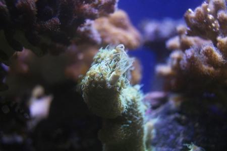 coral scene in reef aquarium Stock Photo - 23449013