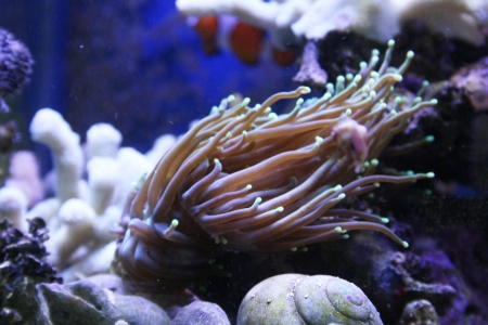 softcoral: Large Whip Coral Beauty
