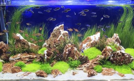 Planted  Freshwater Aquarium Stock Photo