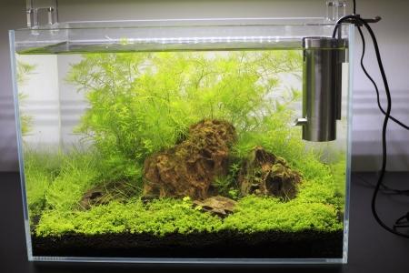 aquarium eau douce: Plant� Aquarium d'eau douce