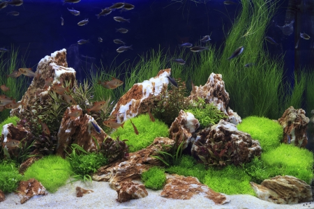 Planted Freshwater Aquarium photo