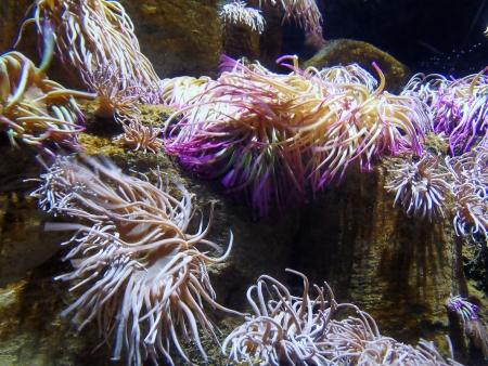 sarcophyton: Sea Anemone Stock Photo
