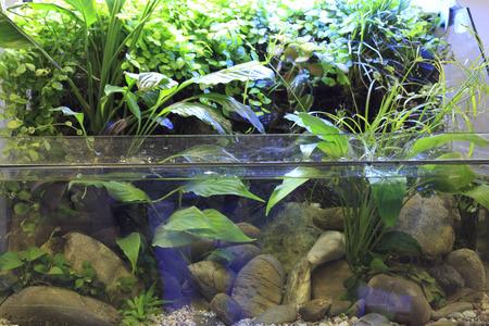 amano: Planted aquarium