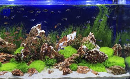 Beplant aquarium met vissen Stockfoto