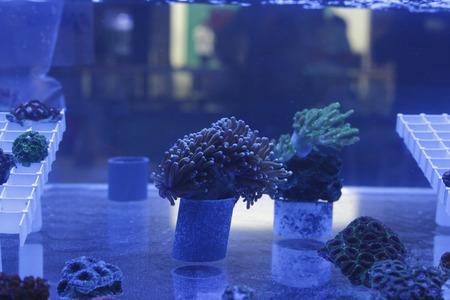Aquarium with corals photo