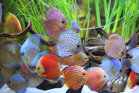 gekleurde discus Stockfoto