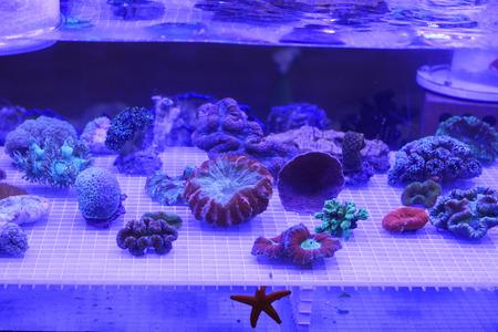 exoticism saltwater fish: corals under blue light