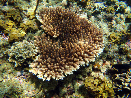 Colorful coral reef photo