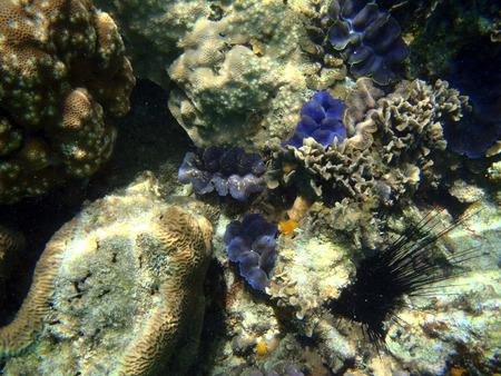 bleaching: Underwater World